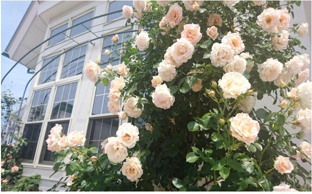 花盛りの六月