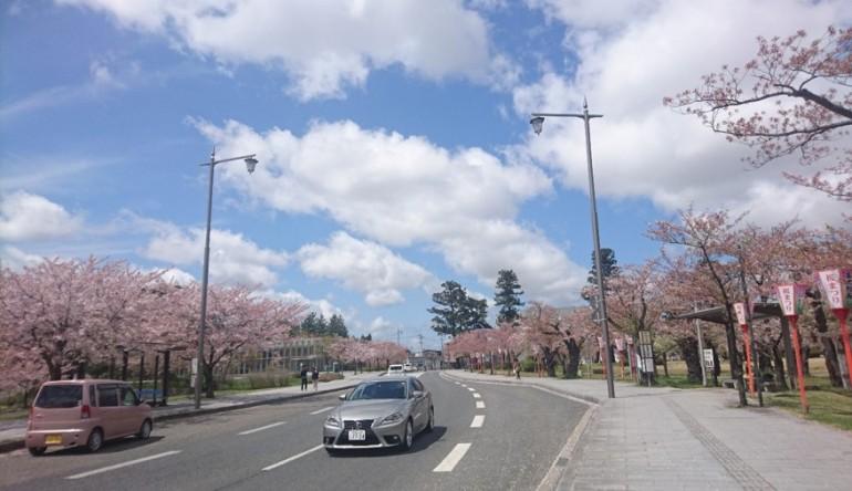 桜散策~鶴岡公園~