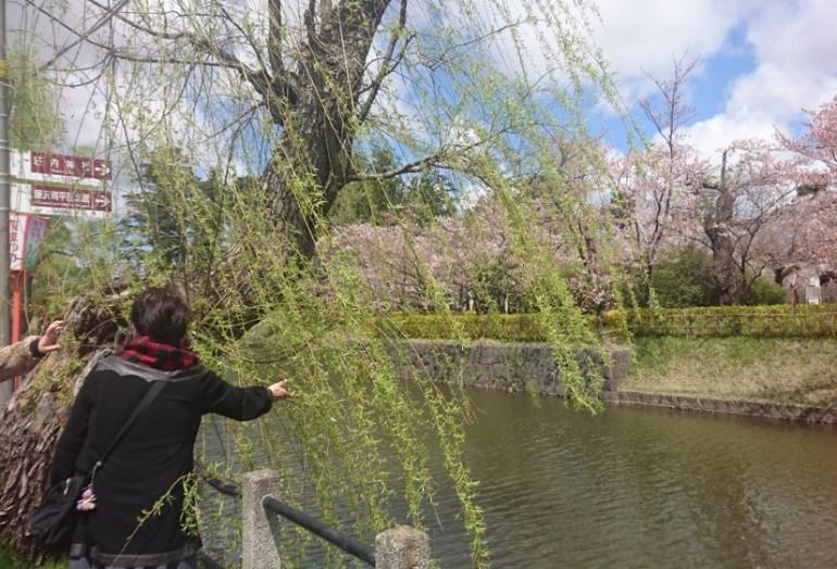 鶴岡~桜の続き~