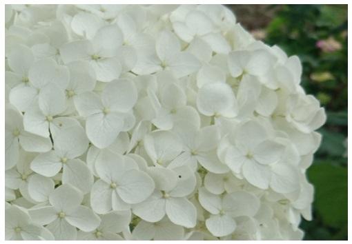 白い花がすき