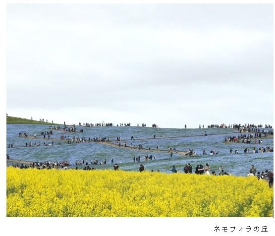 水色の花畑