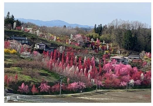 福島の春の山