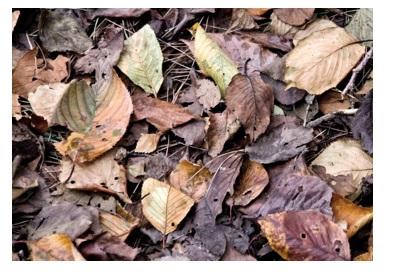 葉っぱのひとりごと