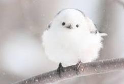 この冬は寒い?