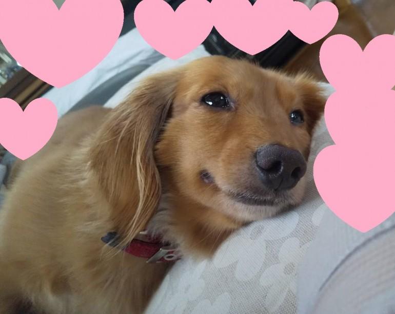 心を開いてくれた犬