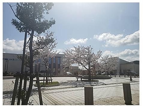 がんばって♥桜